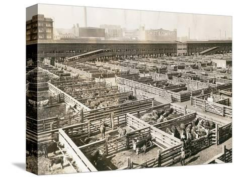 Overhead View of Chicago Stockyards--Stretched Canvas Print