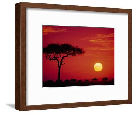 Wildebeest Migration, Masai Mara, Kenya-Dee Ann Pederson-Framed Art Print