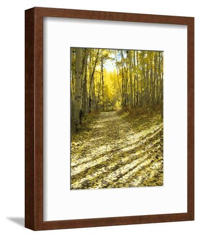 Aspen, Dirt Road, Kebler Pass, Colorado, USA-Darrell Gulin-Framed Art Print