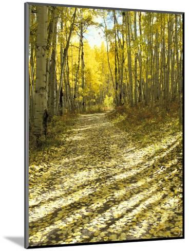 Aspen, Dirt Road, Kebler Pass, Colorado, USA-Darrell Gulin-Mounted Photographic Print