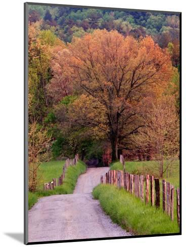 Sparks Lane, Cades Cove, Great Smoky Mountains National Park, Tennessee, USA-Adam Jones-Mounted Photographic Print