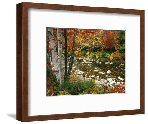 Swift River with Aspen and Maple Trees in the White Mountains, New Hampshire, USA-Darrell Gulin-Framed Art Print