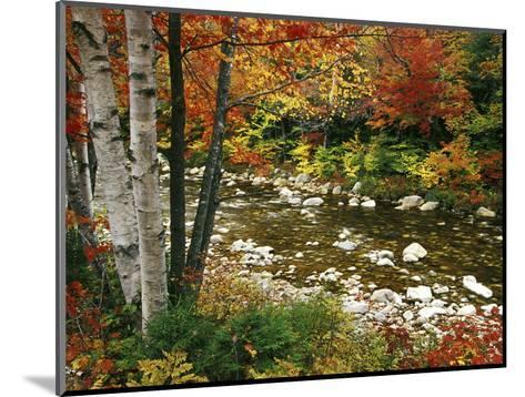 Swift River with Aspen and Maple Trees in the White Mountains, New Hampshire, USA-Darrell Gulin-Mounted Photographic Print