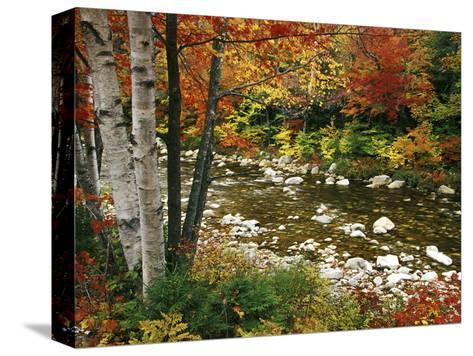 Swift River with Aspen and Maple Trees in the White Mountains, New Hampshire, USA-Darrell Gulin-Stretched Canvas Print