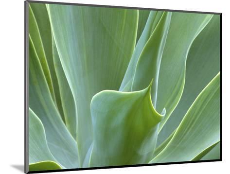 Agave Plant, Maui, Hawaii, USA-Julie Eggers-Mounted Photographic Print