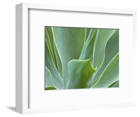 Agave Plant, Maui, Hawaii, USA-Julie Eggers-Framed Art Print