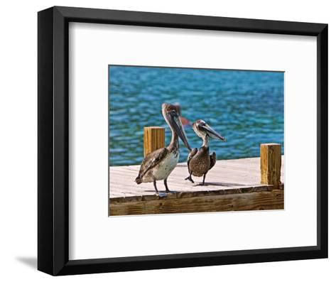 Brown Pelican-Joe Restuccia III-Framed Art Print