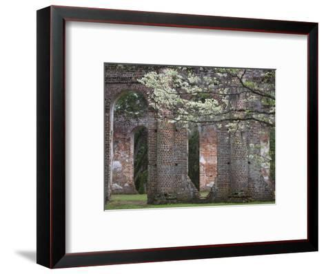 Ruins in the Spring of Old Sheldon Church, South Carolina, Usa-Joanne Wells-Framed Art Print