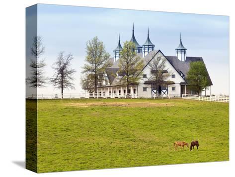 Thoroughbred Horses Grazing, Manchester Horse Farm, Lexington, Kentucky, Usa-Adam Jones-Stretched Canvas Print