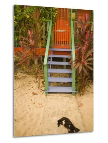 Cat Sleeping By Entrance, Placencia, Stann Creek District, Belize-John & Lisa Merrill-Metal Print