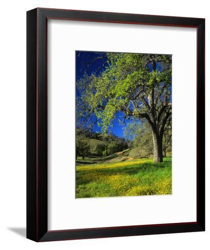 Oaks and Flowers, California, USA-John Alves-Framed Art Print