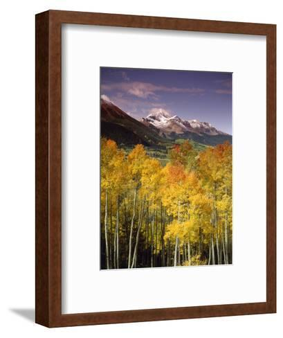 Aspen Tree, Snowcapped Mountain, San Juan National Forest, Colorado, USA-Stuart Westmorland-Framed Art Print
