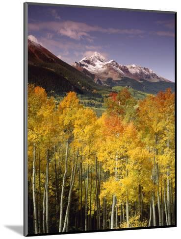 Aspen Tree, Snowcapped Mountain, San Juan National Forest, Colorado, USA-Stuart Westmorland-Mounted Photographic Print
