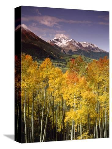 Aspen Tree, Snowcapped Mountain, San Juan National Forest, Colorado, USA-Stuart Westmorland-Stretched Canvas Print