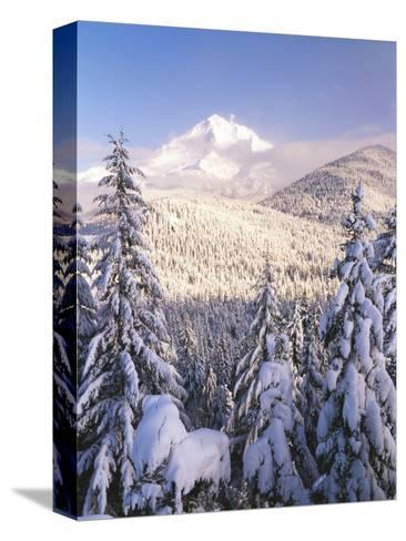 Winter Frost Trees on Mt. Hood, Mt Hood National Forest, Oregon, USA-Stuart Westmorland-Stretched Canvas Print