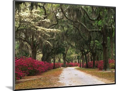 Road Lined with Azaleas and Live Oaks, Spanish Moss, Savannah, Georgia, USA-Adam Jones-Mounted Photographic Print