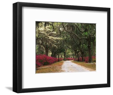 Road Lined with Azaleas and Live Oaks, Spanish Moss, Savannah, Georgia, USA-Adam Jones-Framed Art Print