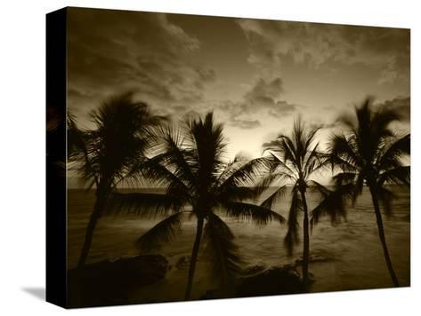 View Palm Trees on Beach, Big Islands, Kona, Hawaii, USA-Stuart Westmorland-Stretched Canvas Print