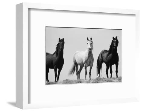 Wild Stallion Horses, Alkali Creek, Cyclone Rim, Continental Divide, Wyoming, USA-Scott T^ Smith-Framed Art Print
