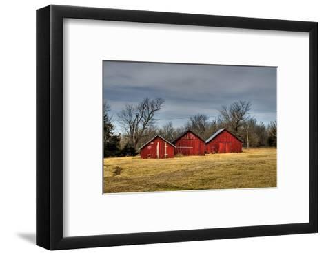 Three Barns, Kansas, USA-Michael Scheufler-Framed Art Print