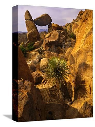 Rock Formations in Grapevine Hills, Big Bend National Park, Texas, USA-Jerry Ginsberg-Stretched Canvas Print