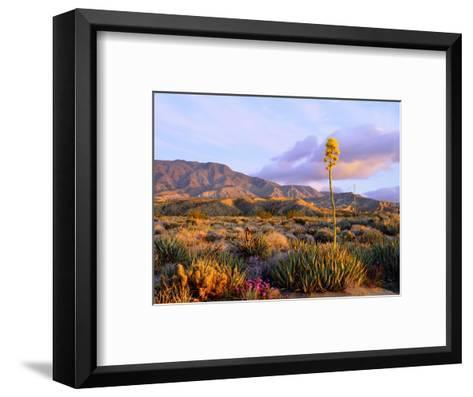 USA, California, Anza-Borrego Desert State Park. Agave Wildflowers-Jaynes Gallery-Framed Art Print