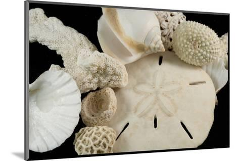 White Seashells, Sand Dollar, and Coral from around the World-Cindy Miller Hopkins-Mounted Photographic Print