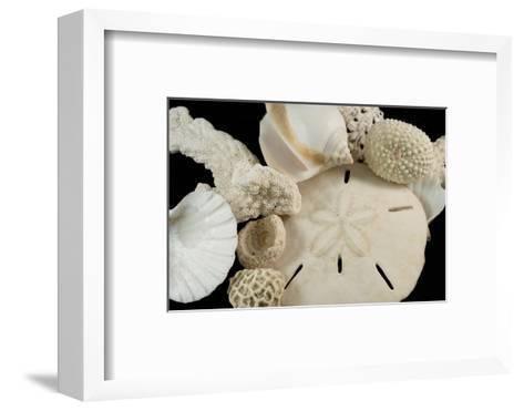 White Seashells, Sand Dollar, and Coral from around the World-Cindy Miller Hopkins-Framed Art Print