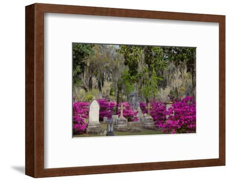 Azaleas and Headstones in Bonaventure Cemetery, Savannah, Georgia, USA-Joanne Wells-Framed Art Print