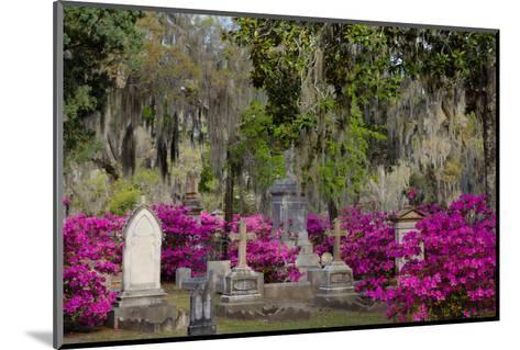 Azaleas and Headstones in Bonaventure Cemetery, Savannah, Georgia, USA-Joanne Wells-Mounted Photographic Print
