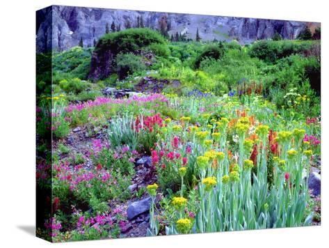 USA, Colorado, Wildflowers in Yankee Boy Basin in the Rocky Mountains-Jaynes Gallery-Stretched Canvas Print