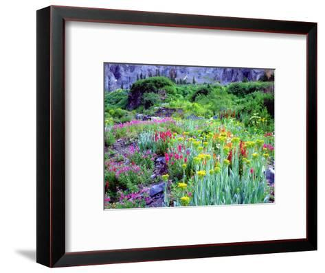 USA, Colorado, Wildflowers in Yankee Boy Basin in the Rocky Mountains-Jaynes Gallery-Framed Art Print
