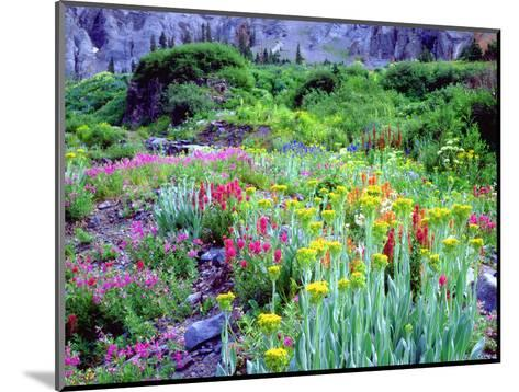 USA, Colorado, Wildflowers in Yankee Boy Basin in the Rocky Mountains-Jaynes Gallery-Mounted Photographic Print