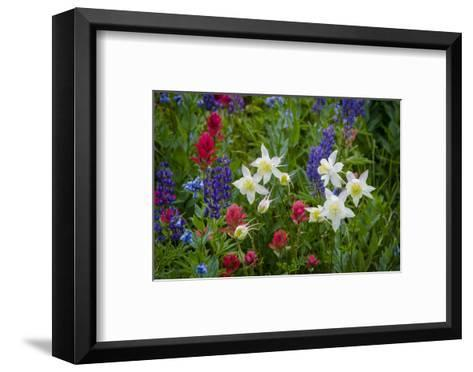Columbine, Indian Paintbrush, Bluebells, and Lupine, Utah-Howie Garber-Framed Art Print