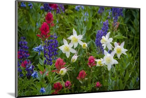 Columbine, Indian Paintbrush, Bluebells, and Lupine, Utah-Howie Garber-Mounted Photographic Print