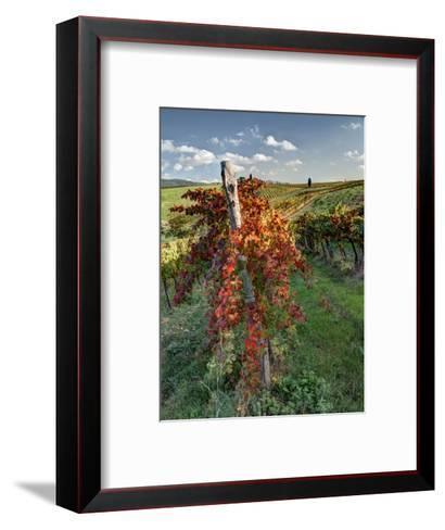 Italy, Tuscany. Vineyard in Autumn in the Chianti Region of Tuscany-Julie Eggers-Framed Art Print
