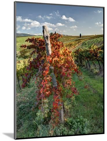 Italy, Tuscany. Vineyard in Autumn in the Chianti Region of Tuscany-Julie Eggers-Mounted Photographic Print