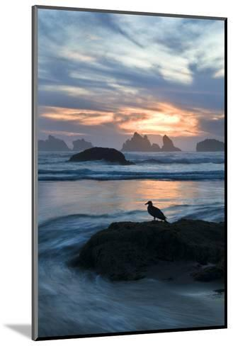 USA, Oregon, Bandon Beach. Seagull on Rock at Twilight-Jaynes Gallery-Mounted Photographic Print