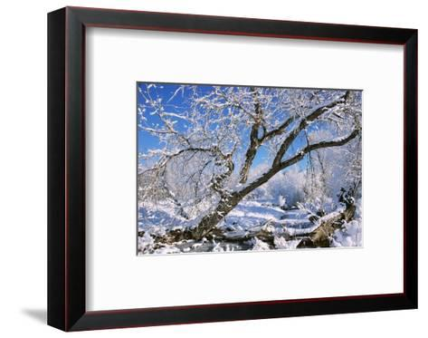 USA, Colorado, Boulder. Winter Scenic-Jaynes Gallery-Framed Art Print