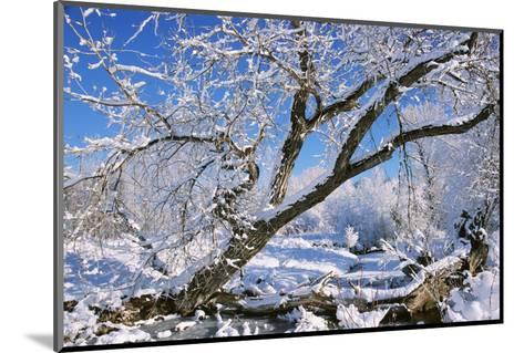 USA, Colorado, Boulder. Winter Scenic-Jaynes Gallery-Mounted Photographic Print