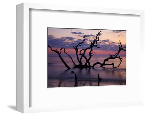 USA, Georgia, Jekyll Island, Driftwood Beach at Sunrise-Joanne Wells-Framed Art Print