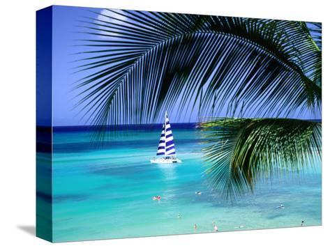 Palm Tree, Swimmers and a Boat at the Beach, Waikiki, U.S.A.-Ann Cecil-Stretched Canvas Print