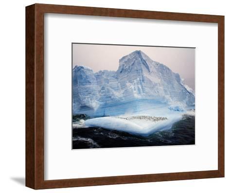 Scotia Sea, Chinstrap Penguins on Iceberg, Antarctica-Allan White-Framed Art Print