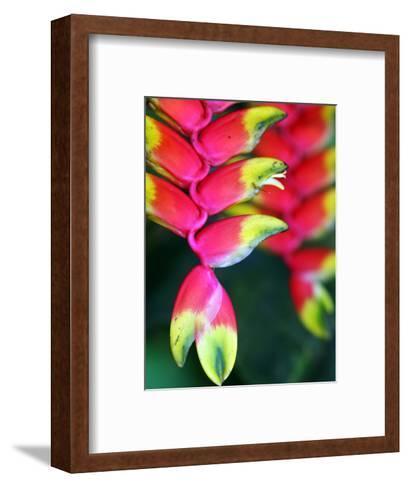 Colourful Shitulli Flower-Paul Kennedy-Framed Art Print