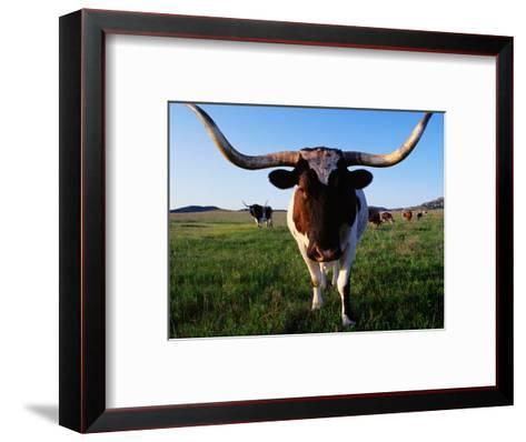 Texas Longhorn Cattle-John Elk III-Framed Art Print