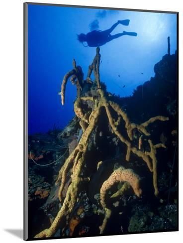 Diver Silhouette over Reef with Large Stand of Scattered Pore Rope Sponge-Michael Lawrence-Mounted Photographic Print