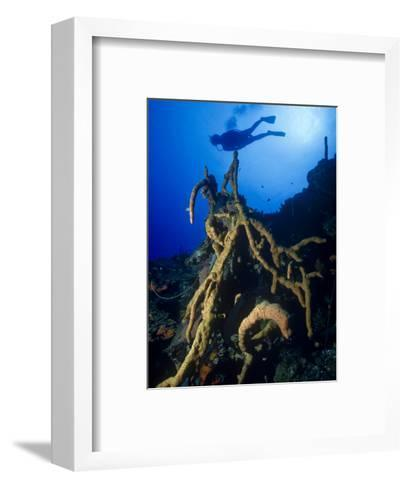 Diver Silhouette over Reef with Large Stand of Scattered Pore Rope Sponge-Michael Lawrence-Framed Art Print