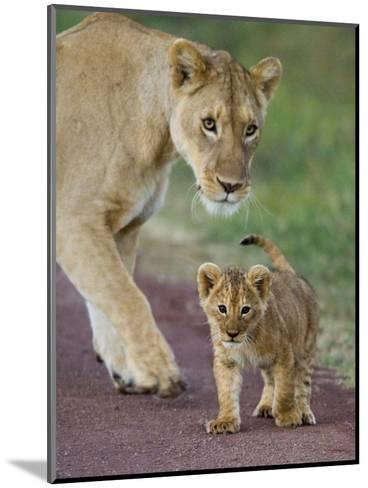 Close-up of a Lioness and Her Cub, Ngorongoro Crater, Ngorongoro Conservation Area--Mounted Photographic Print