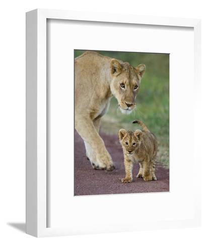 Close-up of a Lioness and Her Cub, Ngorongoro Crater, Ngorongoro Conservation Area--Framed Art Print