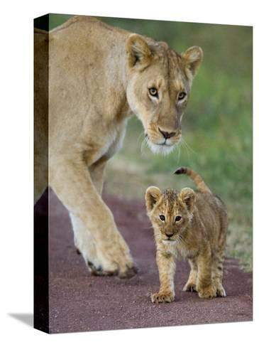 Close-up of a Lioness and Her Cub, Ngorongoro Crater, Ngorongoro Conservation Area--Stretched Canvas Print